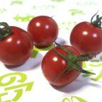 ミニトマト依存症のススメ!健康効果を過信する効果!